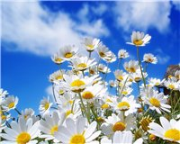 Цветочки-с11