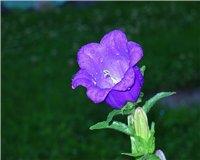 Цветочки-c11